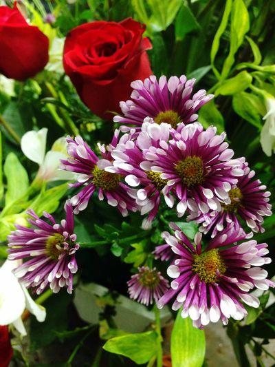 Rosassaroja] Flowers Flower Margaritas Plants Plantas Flores Y Frutos Plantas Y Hojas