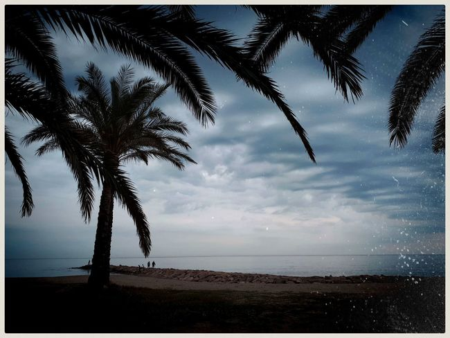 Calm before the storm. Mobilephotography Samsungphotography Ace5 Kultcamera Mediterranean  Waves Peaceful Cloudy Skies Tree Water Palm Tree Sea Beach Sky Horizon Over Water Tranquil Scene Storm Cloud