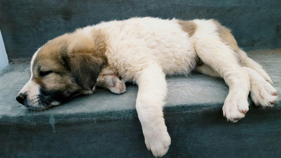 Puppy resting on steps