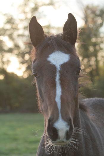 Foals Horses