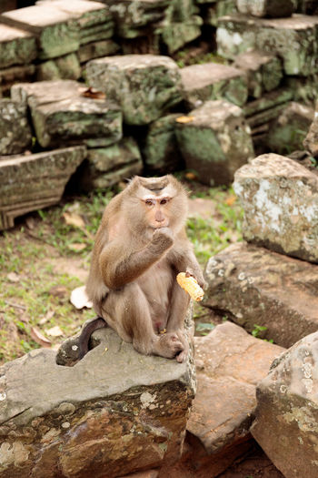 View of monkey sitting on rock against stone wall