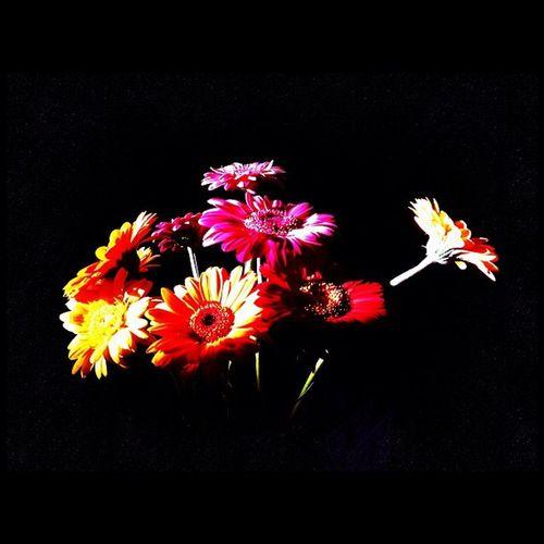Spielerei mit der Morgensonne. Flowers Blumen Iphoneonly Igersmunich Instamuc