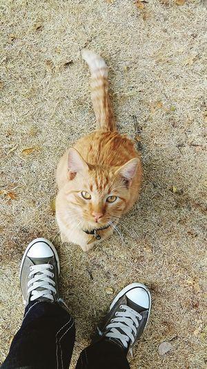 Big Baby ❤ Big Baby Furbaby Furball Tabby Cat Meow Love My Cat Cool Cat Cat Lovers My Baby Big Eyes Beautiful Eyes Cat Eyes
