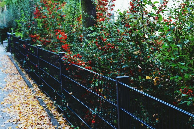 Nature No People Outdoors Day Tree Beauty In Nature Autumn🍁🍁🍁 Broun Beautiful Beauty In Nature Nature Fence Redberries 🌆🍂🍁😍📷