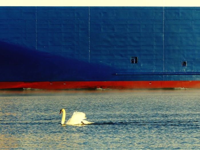 Sea Water Bird Swan Shipping Containers Ferry Crossing Ferryboat Transportation Nautical Vessel Sunrise Industry Outdoors Nautical Sailing Ship Baltic Sea Blue No People Seascape Photography EyeEm Best Shots EyeEm Best Shots - Nature EyeEm Nature Lover Nature Beach
