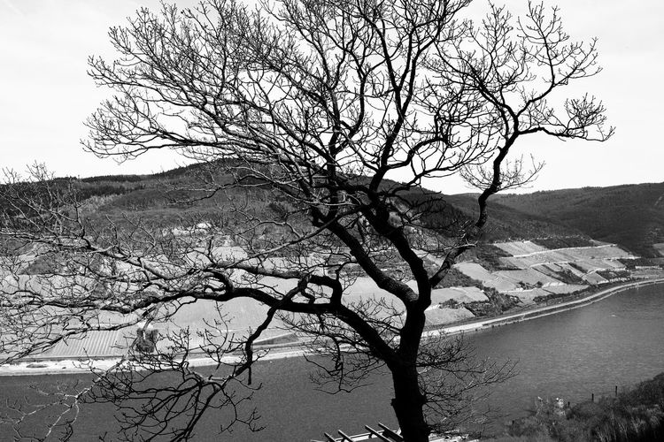 Reihn Bare Tree Beauty In Nature Blackandwhite Branch Day Lake Mountain Nature No People Outdoors Plant Scenics - Nature Sky Tranquil Scene Tranquility Tree Tree Trunk Trunk Water
