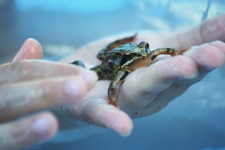 Copped image of hands holding frog