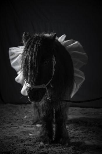 Horse One Animal Pets First Eyeem Photo
