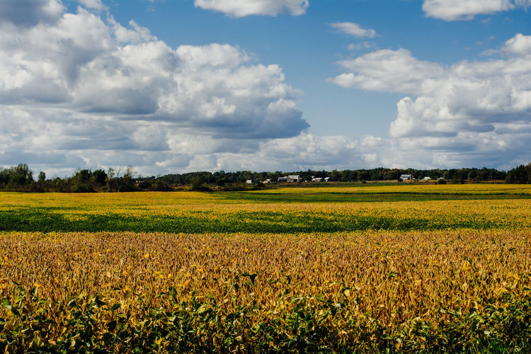 Landscape Field Cloud - Sky Land Sky Beauty In Nature Environment Agriculture Scenics - Nature Tranquil Scene Tranquility Plant Rural Scene Nature Growth Day Farm No People Crop  Flower Outdoors