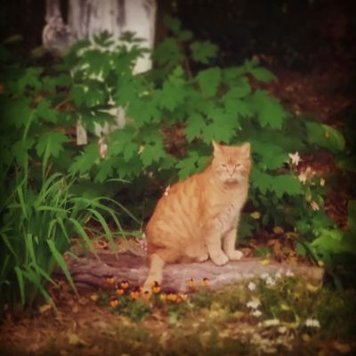 Hobbes looking very Serious in the Goddess Garden. Orange Kitty Cat In My Garden White Light Sanctuary Home Sweet Home