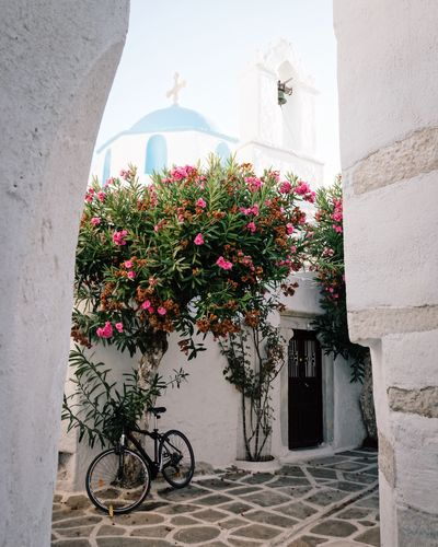 Travel Religion TheWeekOnEyeEM Bougainvillea Frameinframe Cyclades Greece Travel Photography EyeEmNewHere EyeEm Selects EyeEm Gallery EyeEm Best Shots The Week on EyeEm Paros Flowering Plant Architecture Flower Built Structure Plant Building Exterior Nature Bicycle Building Growth Vulnerability  Freshness Fragility No People Outdoors #urbanana: The Urban Playground