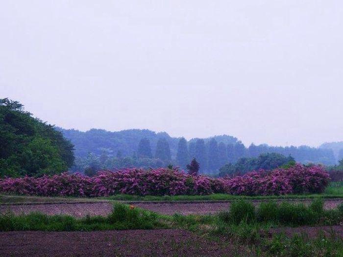 風景 新緑 Landscape Landscape_Collection Landscape_photography Melancholic Landscapes Landscapes NEM Landscapes Landscape Photography EyeEm Best Shots - Landscape