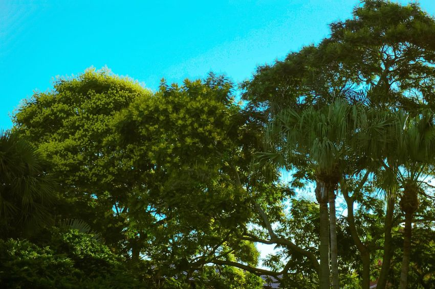 Color correction on point Tree Low Angle View Forest Green Color Outdoors Clear Sky Beauty In Nature No People Nature VSCO Vscocam Visual Feast Art Photography