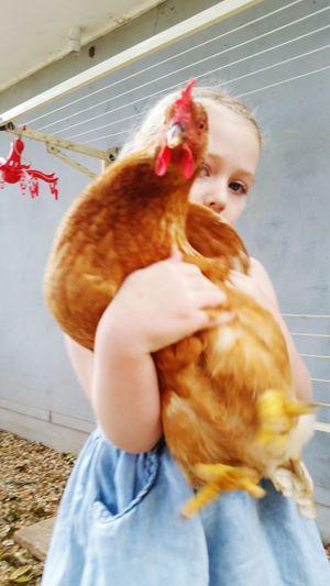 #1 Chook Wrangler Pets EyeEm Selects Mountain Life Truelove Chooks Chicken Whisperer