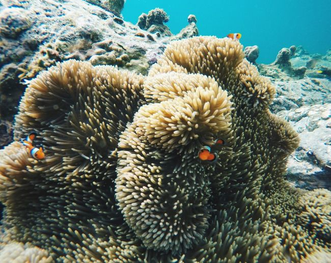 Underwater Sea Life Animal Themes UnderSea Animals In The Wild Coral Sea Swimming Water