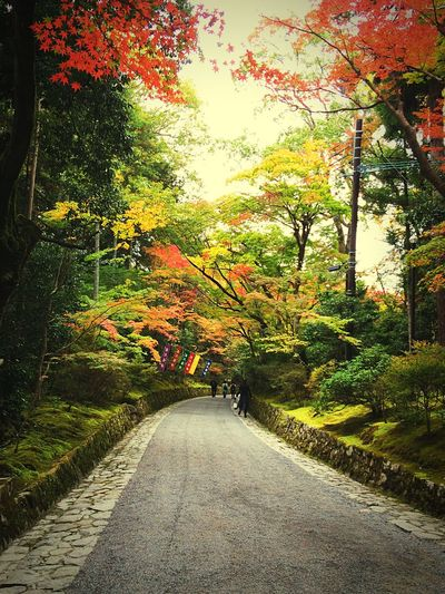 Relaxing 紅葉 京都Japan 赤山禅院