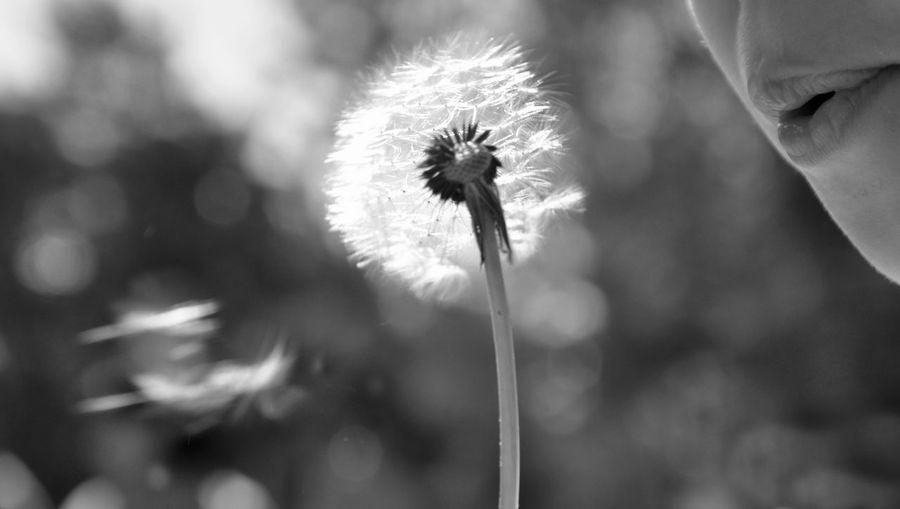 The Moment - 2014 EyeEm Awards Blowing Dreams Q Photography In Motion Black And White Friday
