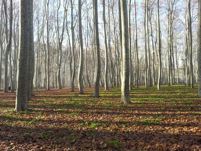 La primera de l'any. Sense filtres... Catalunya WeAreJuxt.com Nofilter Movilgrafias Beautree Gironaemociona Trees