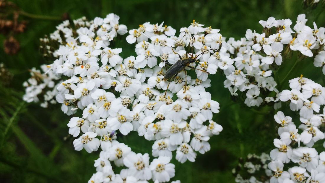 its a bugs life Bug Flower Head Flower Blossom White Color Petal Close-up Plant Plant Life Botany Flowering Plant