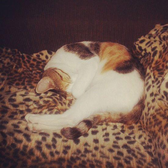 My adopted Mami cat sleeping Catweek Catsweek Catfridayphoto Fridaycatphoto furryfriday cutecat funnycat adoptananimal adopt cat catlovers
