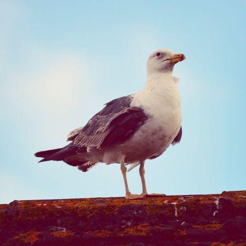 Seagull Bird Roof EyeEm Nature Lover