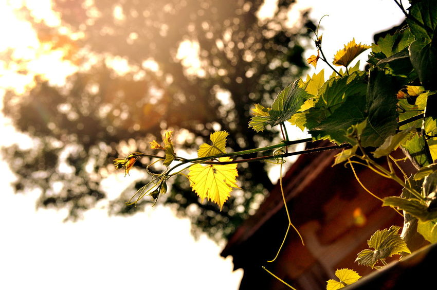Autumn Branch Countryside Leaf Nature Sky Summer Sunlight Travel Tree Yellow