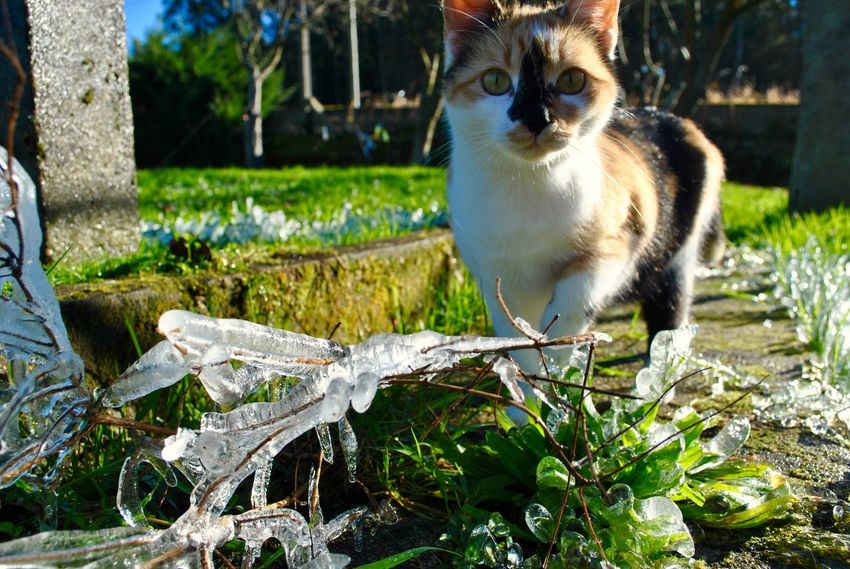 Capture The Moment Cold Weather Colourful Freezing Capture Cold Days Cold Temperature Cold Winter ❄⛄ Colourful Nature Domestic Cat Feline Freeze Freeze Shots Frozen Nature Grass Nature One Animal Outdoors Pets Winter Cat