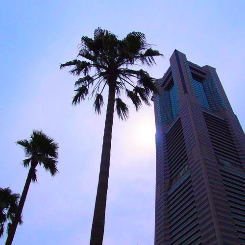 横浜・ランドマークタワー Yokohama Palm Trees Tower Landmark