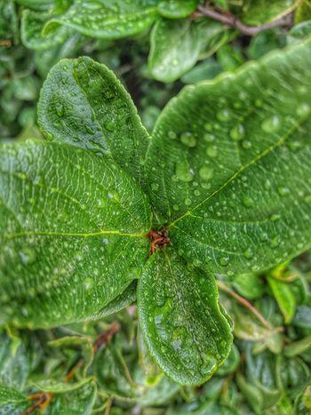 Morning Dew Leaf Insect Spider Spider Web Close-up Green Color Tiny Leaf Vein Leaves Natural Pattern Dew Change Plant Life Growing