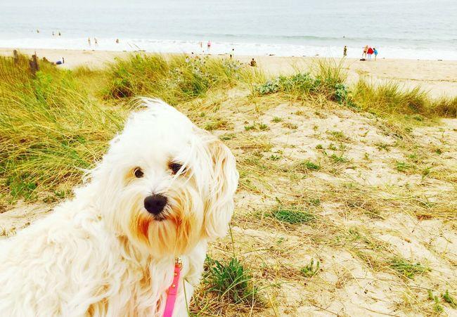 Ile D'Oleron Ilovemydog Myprincess🐶🐶 Isis😍 Holidays ☀ Capturing Freedom