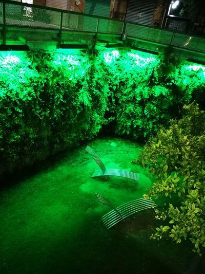 😜 Cagliari, Sardinia Green Color Green Growing Blooming Garden Blade Of Grass