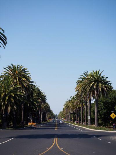 Paloalto California California Love San Francisco Stanford University