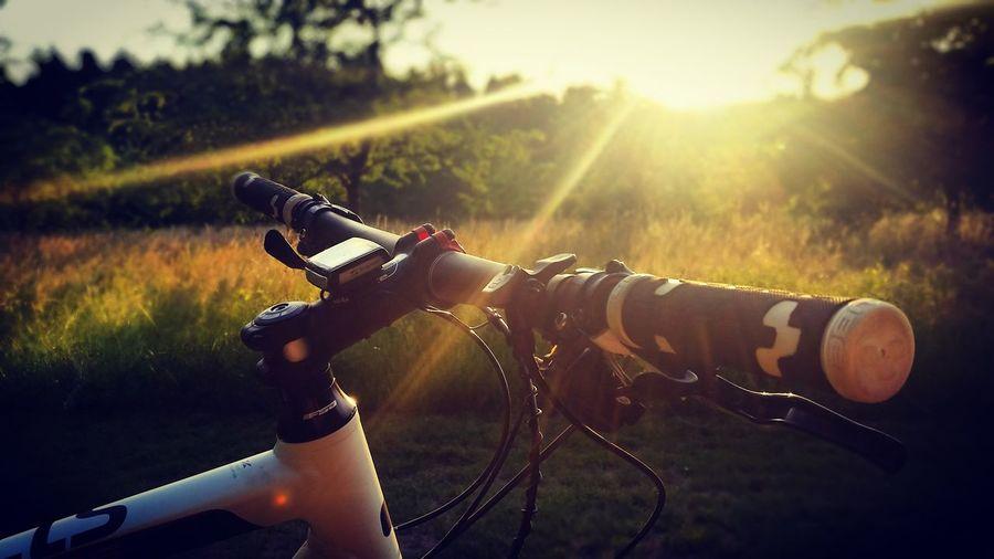 Chillen am Wald✌ Sunset Cycling Chilling Cubebikes Saxony