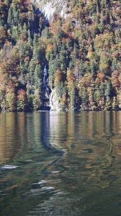Nature Tree Beauty In Nature Water Scenics Waterfront Autumn Tranquil Scene Tranquility No People Day Outdoors Forest Sky Königssee Germany Beauty In Nature Waterfall Schönau Am Königsee Autumn Autumn Collection Fall Beauty Herbststimmung