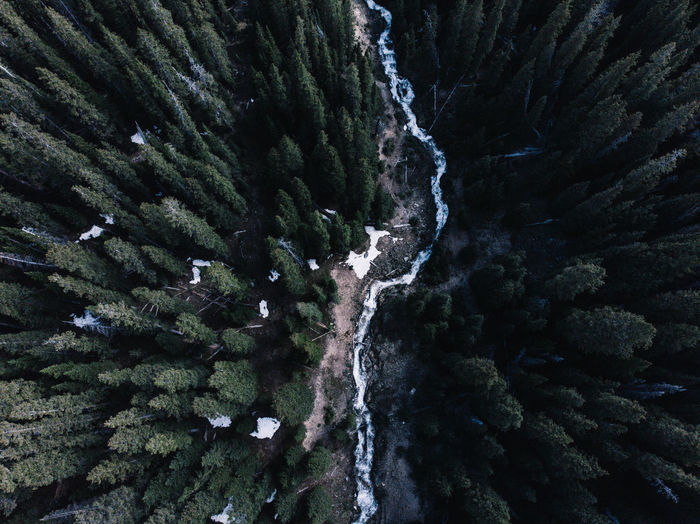 Aerial view of river and trees in forest
