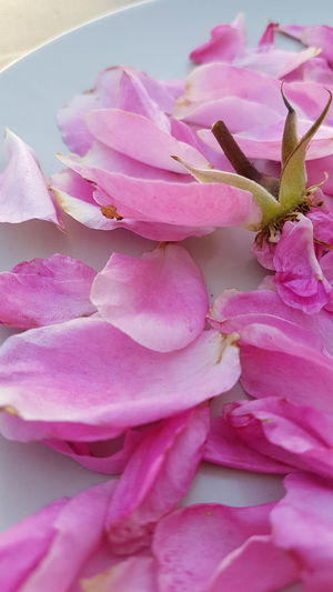 Rose Leaves Freshness Garden Photografie Outdoors Photograpghy  Outdoors Day Fragility Beauty In Nature Flower Head Plant Pink Background Nature Full Frame Petal Flower No People Pink Color Pastel Colored Faded Roses Decorated On A Plate Details Of Nature