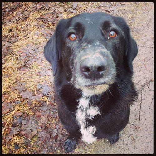 Lerig nos :-) My Dog Bebis <3