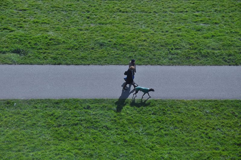 Walking the dog in green Dog Real People Grass Green Color Green Leisure Activity Walking Pedestrian Walkway Day Nature From Above  High Angle View Streetphotography Grassland People Nikon Path Road Way Walking The Dog Two Two People Dog With A Coat