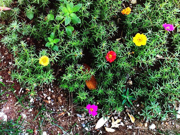 Tiny Tiny Flowers Tiny Flower Details Of Nature Little Little Flowers Little Flower Colors Colours IPhoneography Iphonephotography Tehran Tehran, Iran Iran