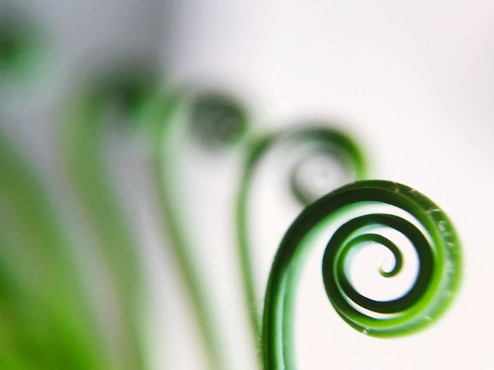 Close-up of spiral pattern