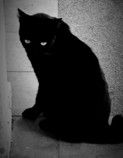 Black Cat Bnw_superstitions Blackandwhite Black Cat Bnw_friday_eyeemchallenge Superstition  Shadow Dark Spooky Domestic Cat Focus On Shadow Mystery Horror Evil