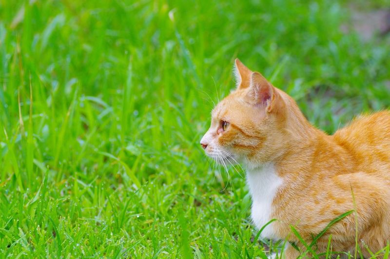 Cat Cat♡ Animals Cat Lovers