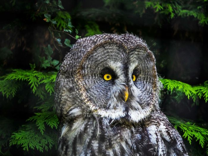 Owl Owllife Zoo Zoo Animals  ZooLife Zoophotography ZOO-PHOTO Animals Animal Photography Bird Photography Birds_collection Birds Eye View EyeEm Best Shots Eyem Eyemphotography Eyem Best Shots Eye4photography  Eyem Nature Lover Eyem Best Shot Dudley Zoo