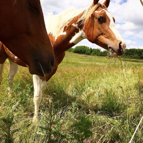 Close up of horses in pasture