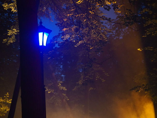 Night lamp Night Tree Sky Illuminated Astronomy Blue EyeEmNewHere City