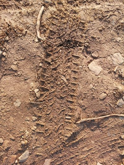 Land Brown No People Dirt Nature Day Full Frame High Angle View Pattern Close-up Outdoors Textured  Mud Backgrounds FootPrint Track - Imprint Tire Track Extinct Sunlight Landscape Climate Arid Climate