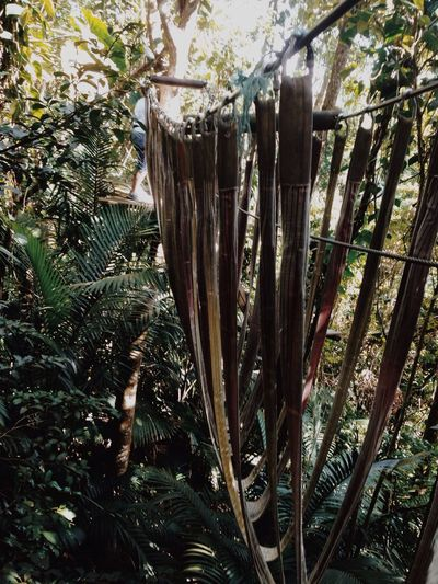 Zipline Excercising Jungle Perfect