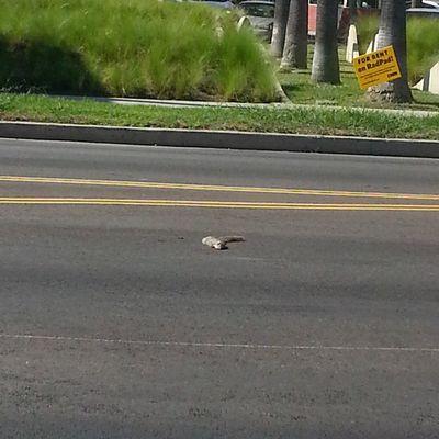 Poor little squirrel :/