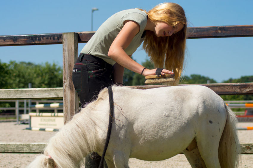Blond Brushes Brushing Care Day Focus On Foreground Girl Horse Horse Shelter Outside Paddock Side View Taanager Take Wash Washing Water White White Color