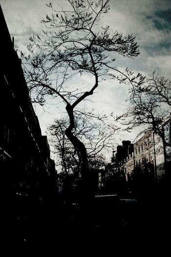 Streetphotography Blackandwhite Claunch 72 Monochrome Film Trees London Streetphoto_bw City Of London Eye4photography  Bloomsbury Ee_daily